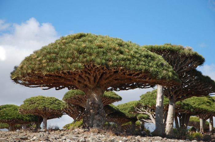 SocotraIsland3