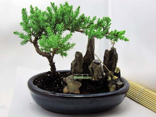 Japanese rock gardens their beauty and order - How to make a japanese rock garden ...