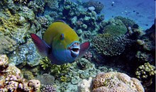 Red Sea, Egypt – Discover the Underwater Paradise