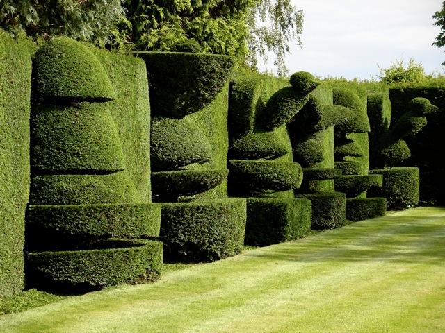 hedges1