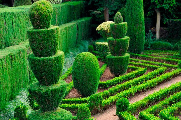 hedges3
