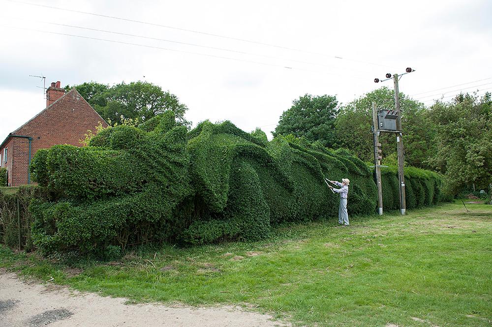 hedges9