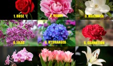 Check Your Personality According To Your Favorite Flower!