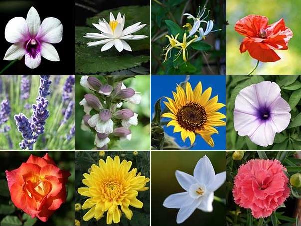 FlowerSigns