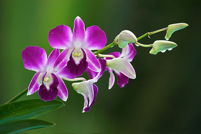 OrchidSign
