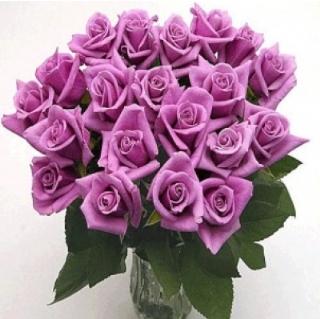 Lav Roses