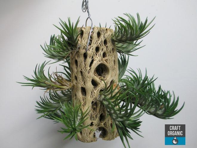 Tillandsia-on-Wood-03-