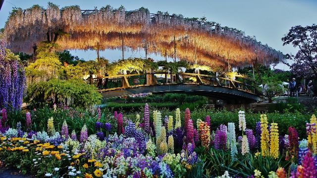ashikaga-flower-park-5