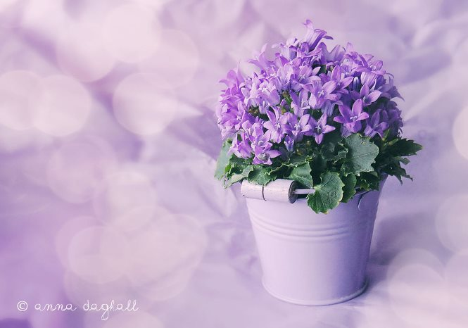 lavender_bokeh_campula_by_happysmitten-d5uouat