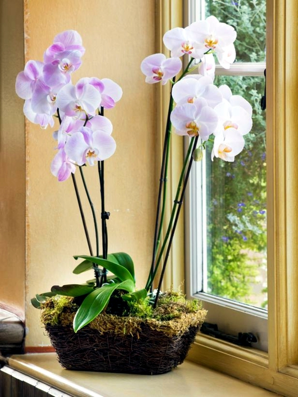 Indoor Plants Amp Flowers That Attract Love Joy And Prosperity