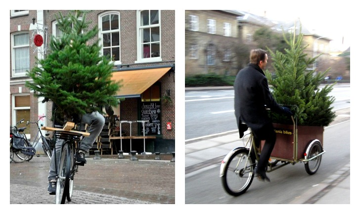 Christmas Tree Bike