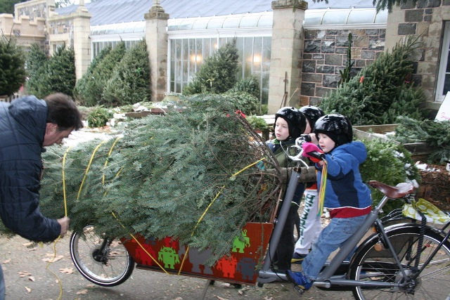 Chrstmas Tree Bike2