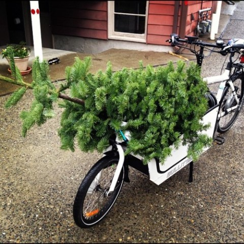 Chrstmas Tree Bike8