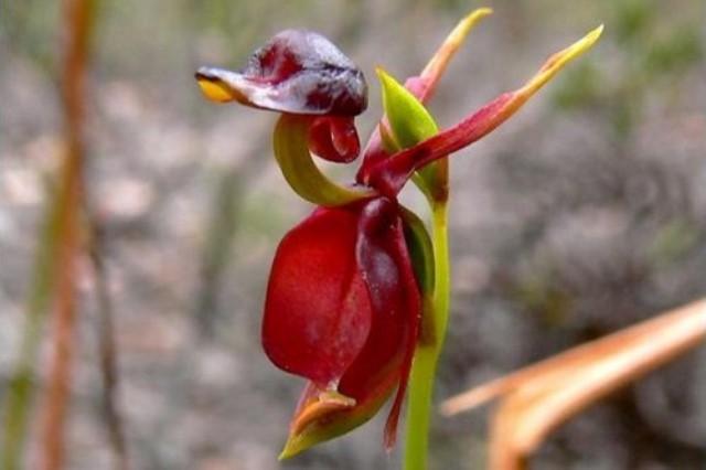 Rare Flower 6