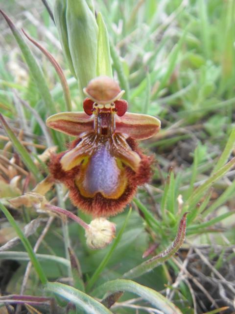Rare Flower 7