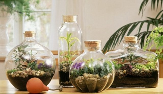Gardening In Bottle : For even the most botanically inept, terrariums are super easy to make ...