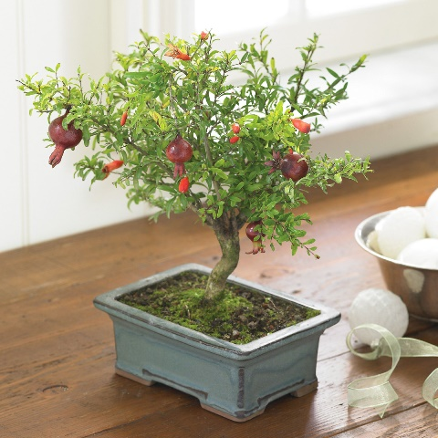 pomegranate-bonsai-tree-1