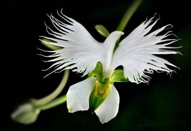 rare flower 1