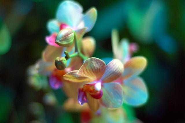 rare flower 3