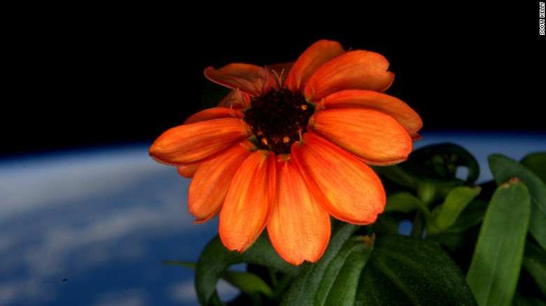160118103230-space-flower-twitter-scott-kelly-exlarge-169