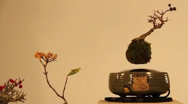 Japanese startup launches Kickstarter campaign for levitating bonsai trees.