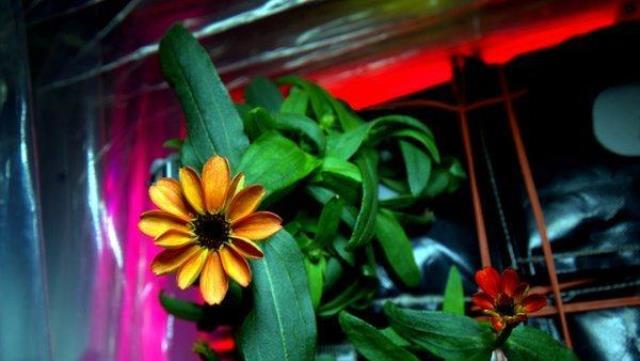 os-astronaut-scott-kelly-first-space-flower