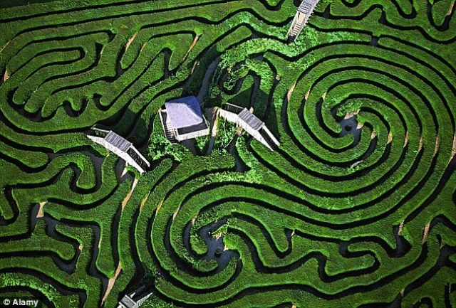Aerial Garden 10