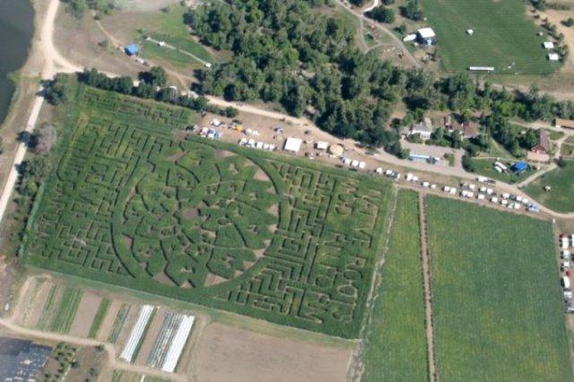 Aerial Garden 6