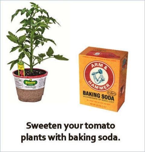 Garden Tips13