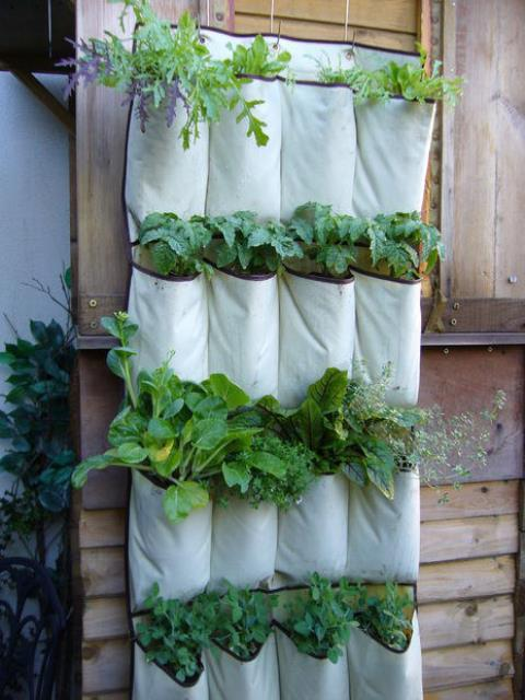 Garden-Tips3 - Vertical Gardens - Photos Unlimited