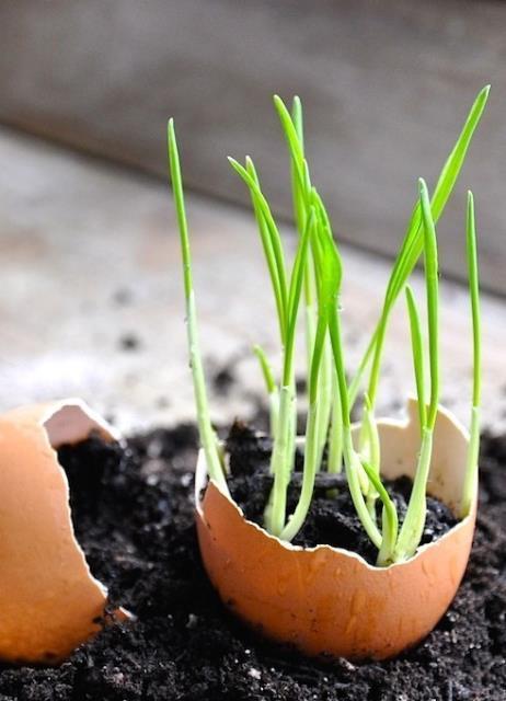 Garden Tips4