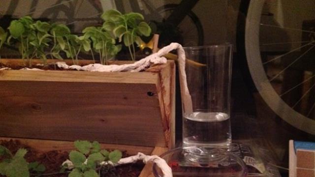 Garden Tips7
