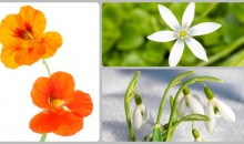 (Quiz) Can You Guess Latin Names Of These Flowers? What Is Your Score?
