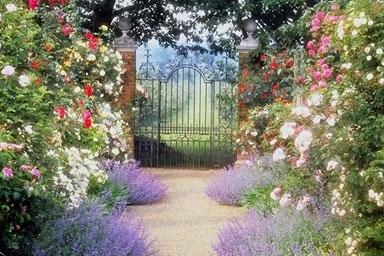 Superbe Dream Garden