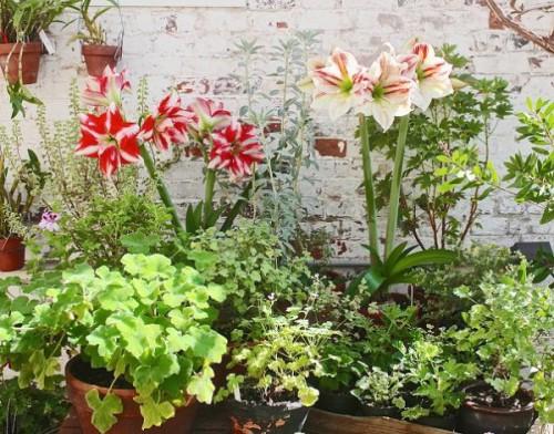 Fragrant Garden 1