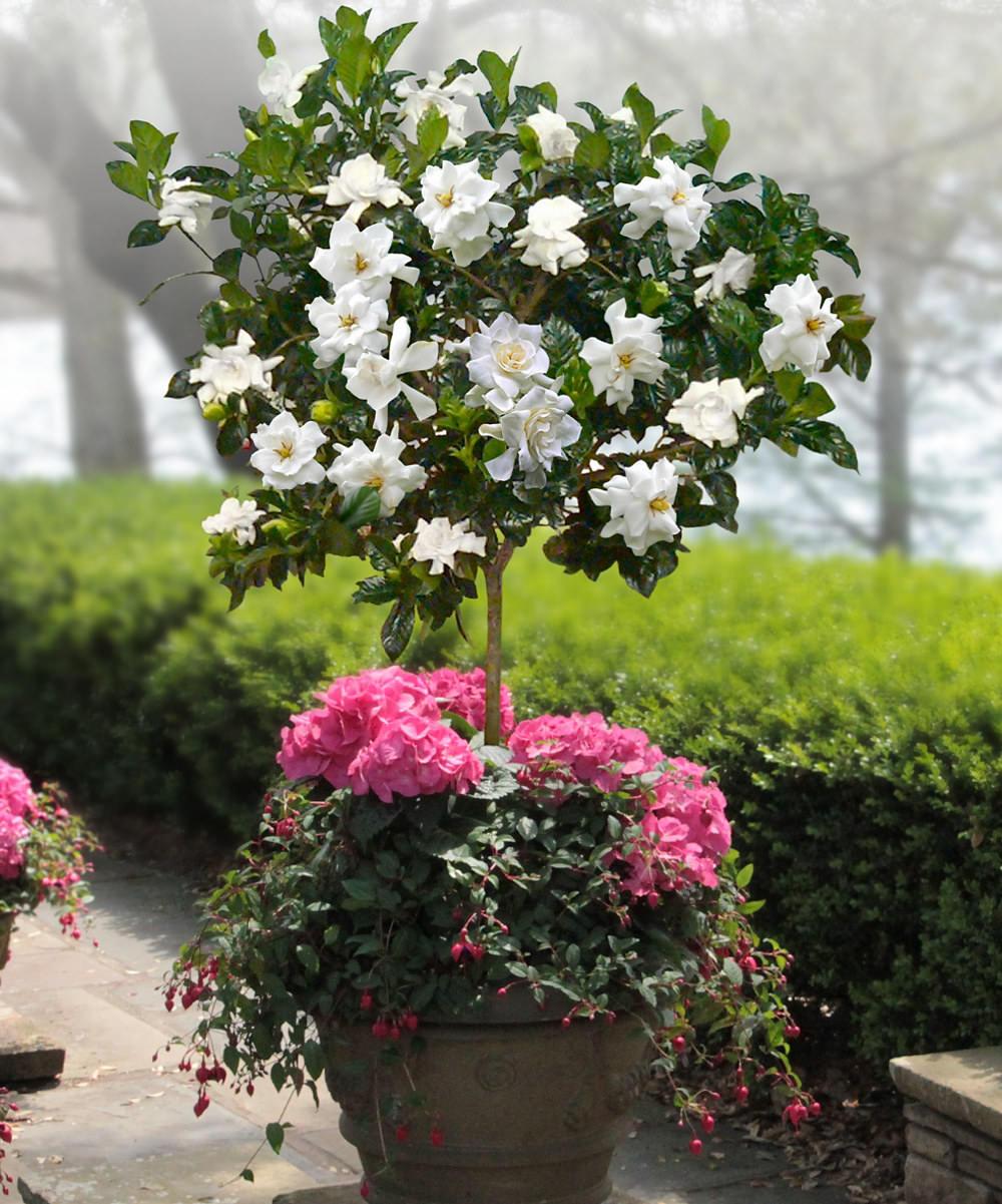 Fragrant Garden 2