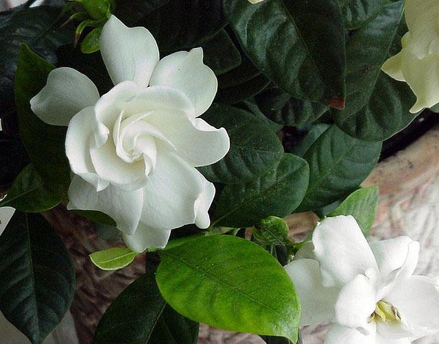 Fragrant Garden 3