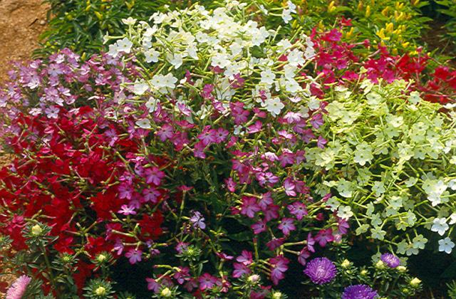 Fragrant Garden 6