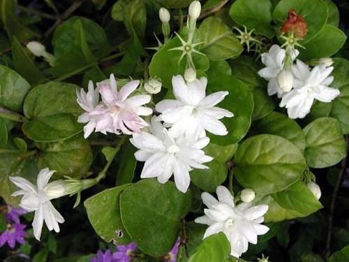 Fragrant Garden 7