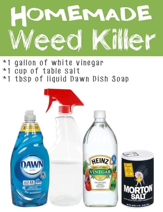 Garden Tips 10