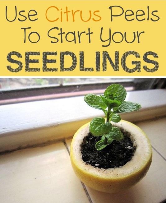 Garden Tips 14