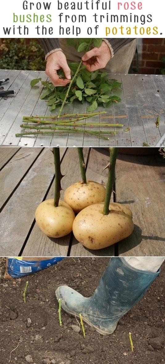 Garden Tips 6
