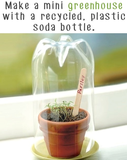 Garden Tips 7