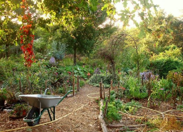 Build your permaculture garden for Permaculture garden designs