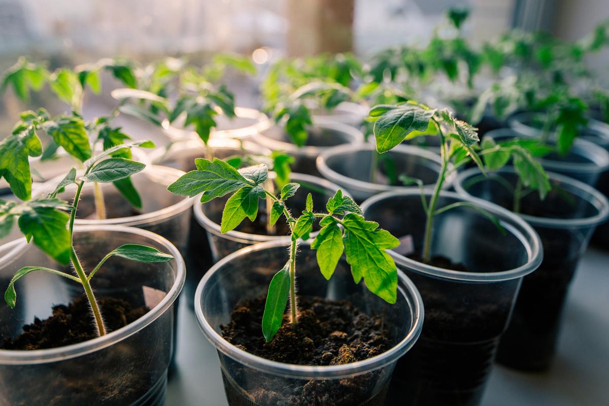 PlantingVegetables2