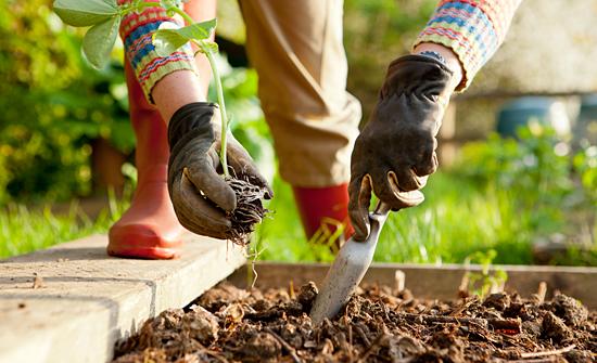 PlantingVegetablesFeat