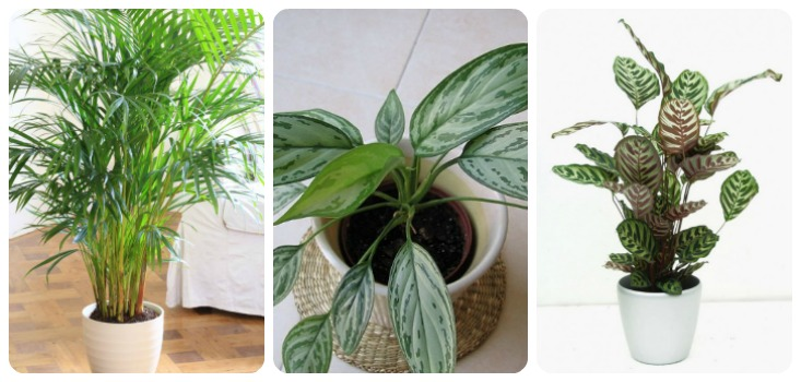 12 Best Plants That Can Grow Indoors Without Sunlight