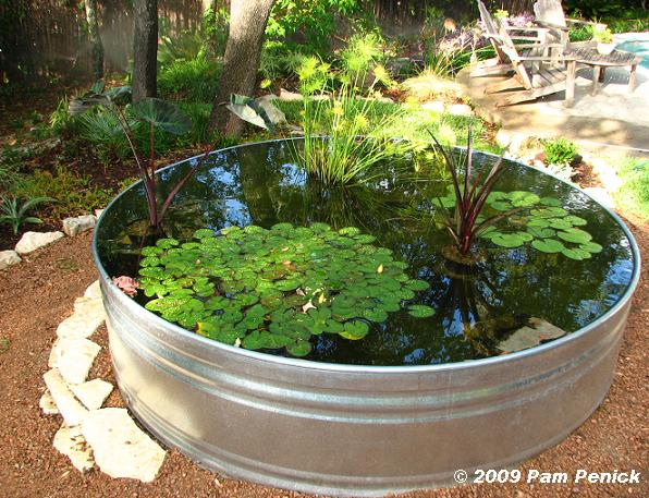 Diy create your own pond in a pot for Planting pond plants in containers