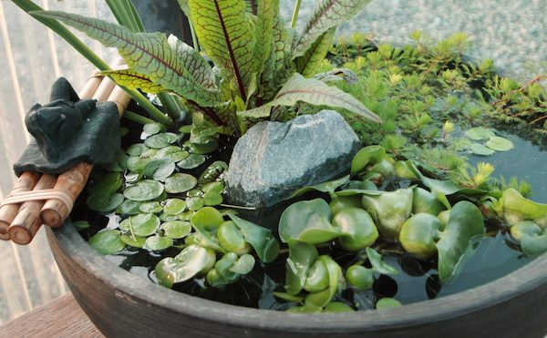 Diy create your own pond in a pot for Container ponds with fish