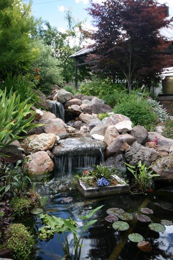 Backyard Pond 18